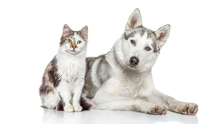 cat and dog with glasses on